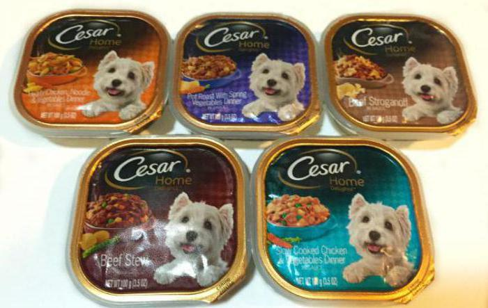 what breed of dog in advertising caesar